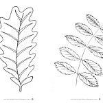 Liście drzew… szablony i karty pracy