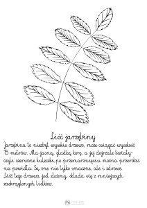 Liść jarzębiny - szablon