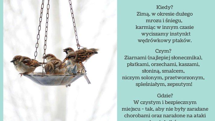 Jak mądrze dokarmiać ptaki
