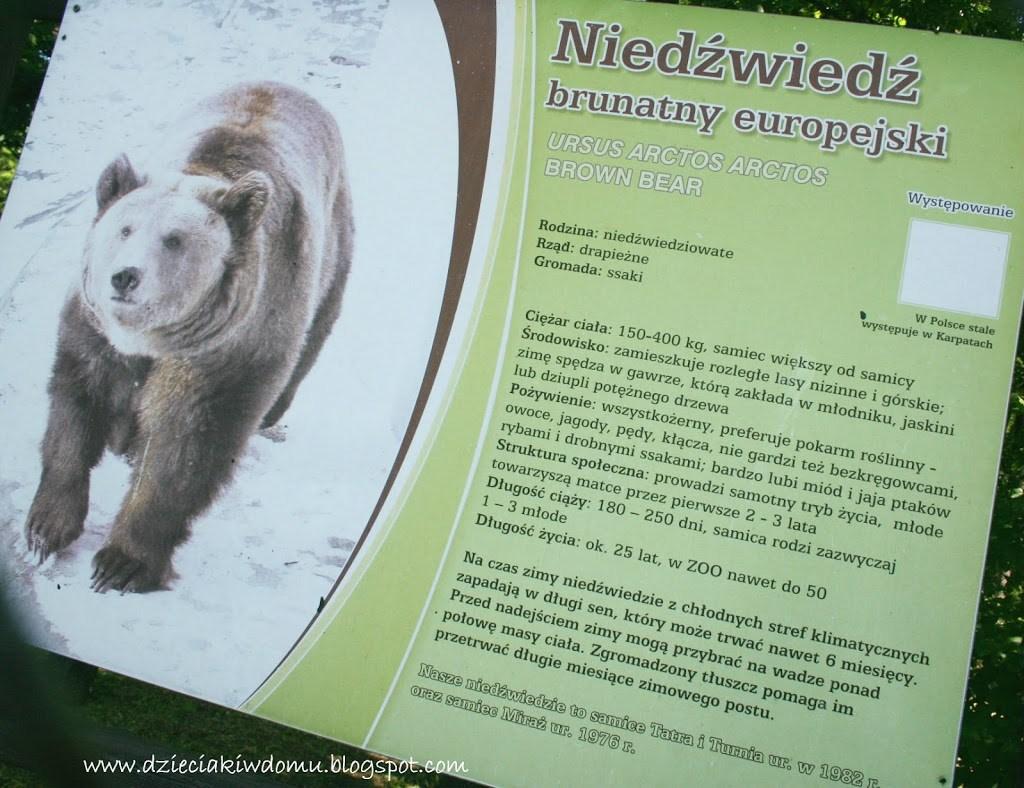 wycieczka z dziećmi do Zoo, zwierzęta warszawskiego Zoo - niedźwiedź