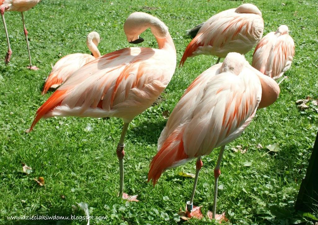 wycieczka z dziećmi do Zoo, zwierzęta warszawskiego Zoo - czerwonak