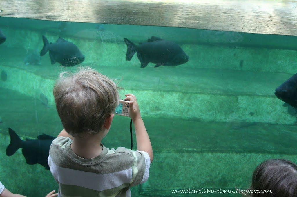 wycieczka z dziećmi do Zoo, rozwijanie pasji i zainteresowań u dzieci