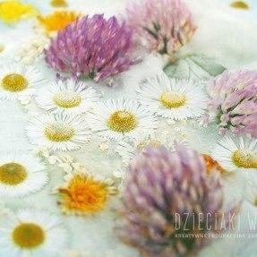 lodowe obrazy z polnych kwiatów - zabawa dla dzieci