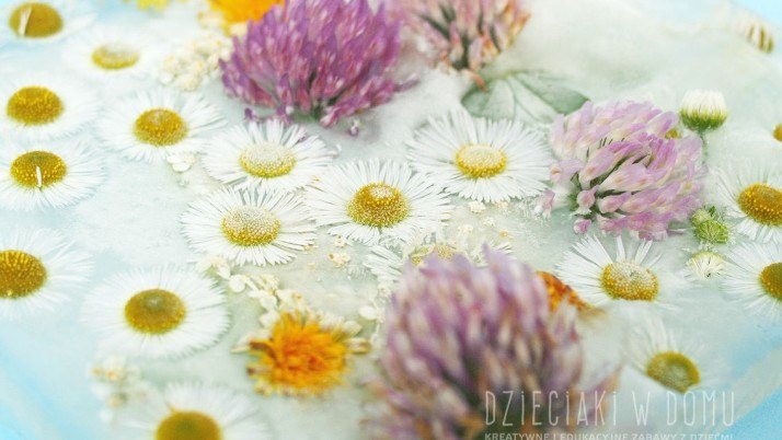 Polne kwiaty – tworzymy lodowe obrazy i kompozycje w wodzie
