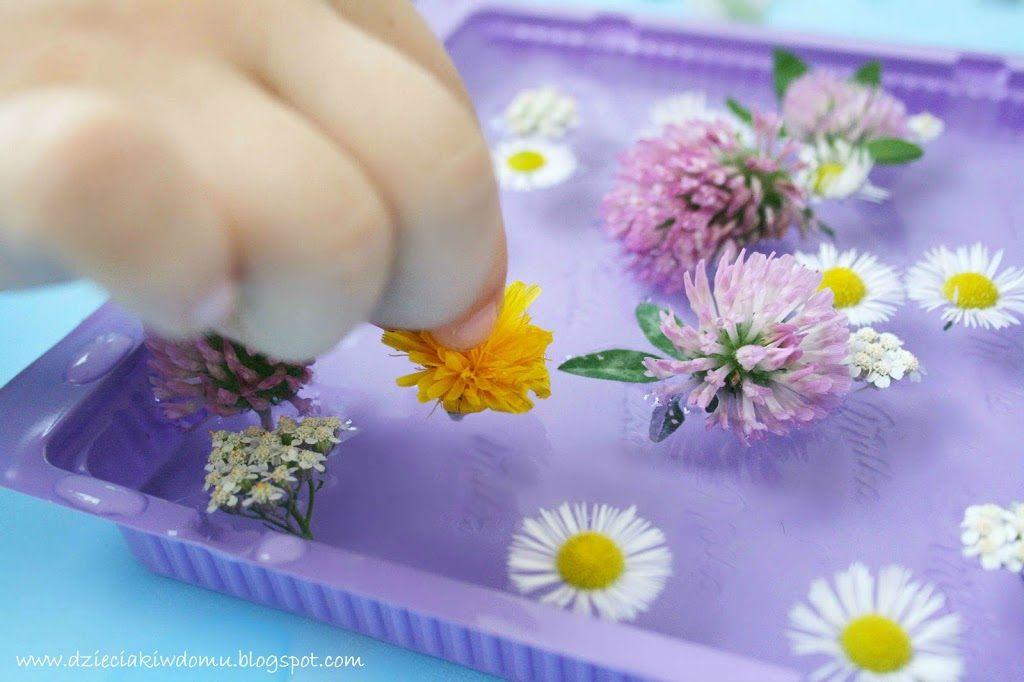 Wodne kompozycje i lodowe obrazy z polnych kwiatów - kreatywna zabawa dla dzieci