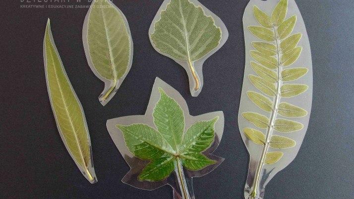Laminowane liście drzew – materiał edukacyjny dla dzieci