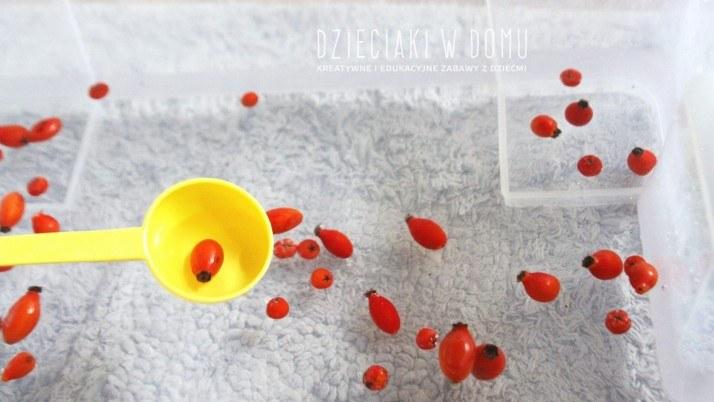 Jarzębina, dzika róża i woda… czyli doskonała, jesienna zabawa dla malucha