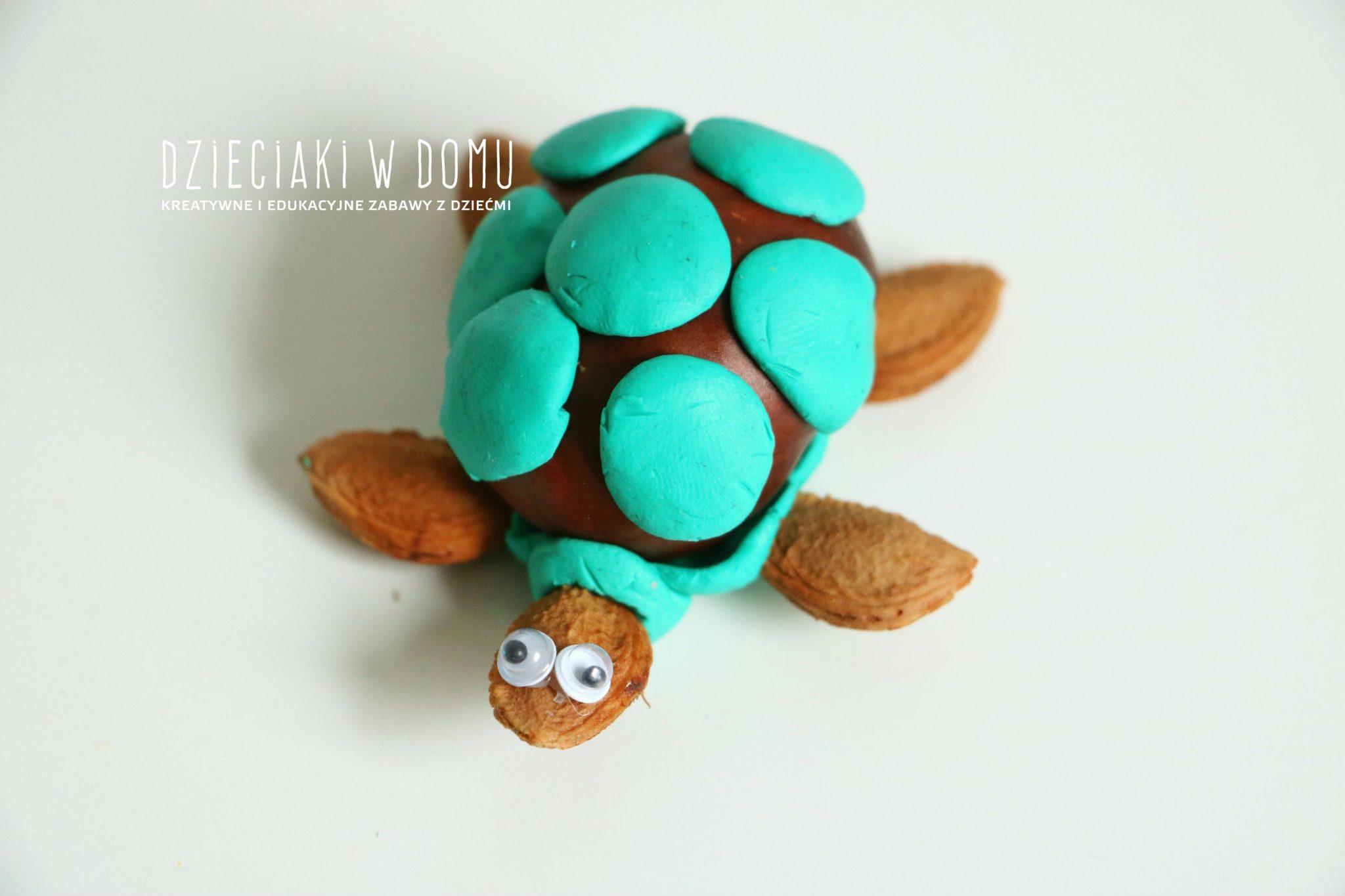 zwierzątka z żołędzi i kasztanów - żółw