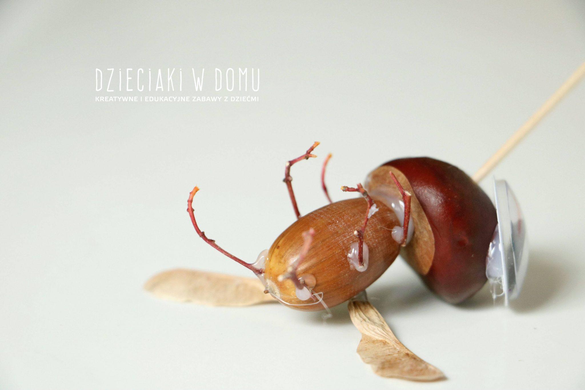 zwierzątka z żołędzi i kasztanów - komar