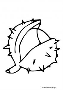 szablon kasztana