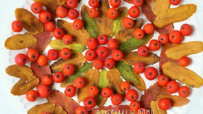 Jesienne mandale z liści i owoców jarzębiny