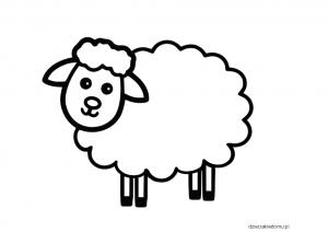 owca szablon