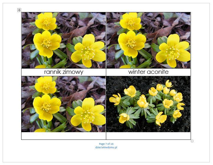 wiosenne kwiaty - karty dla dzieci