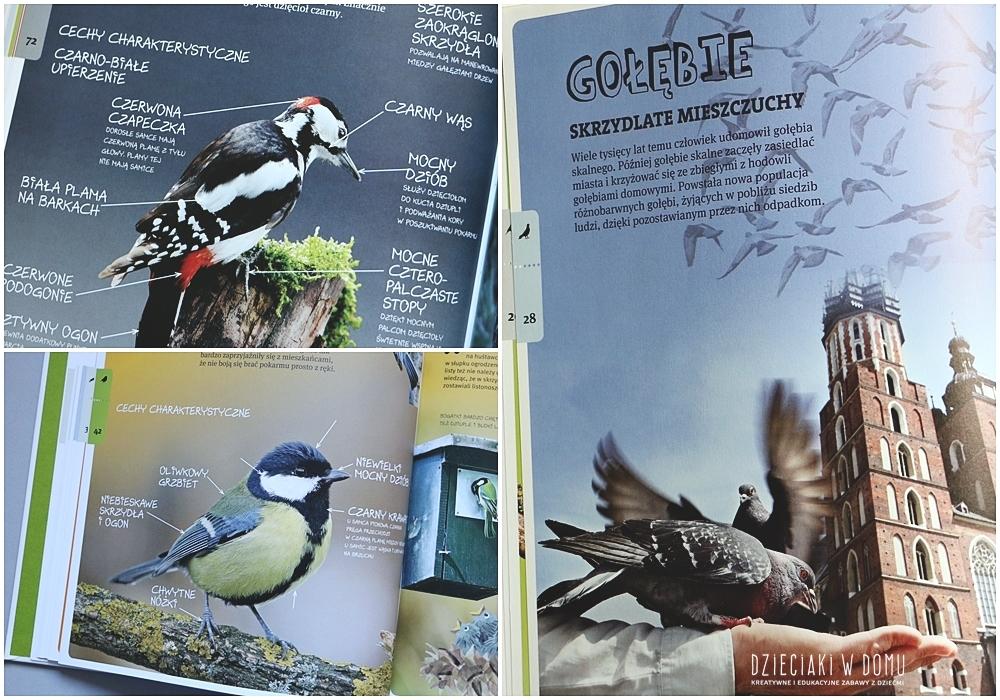 o ptakach - książka dla dzieci