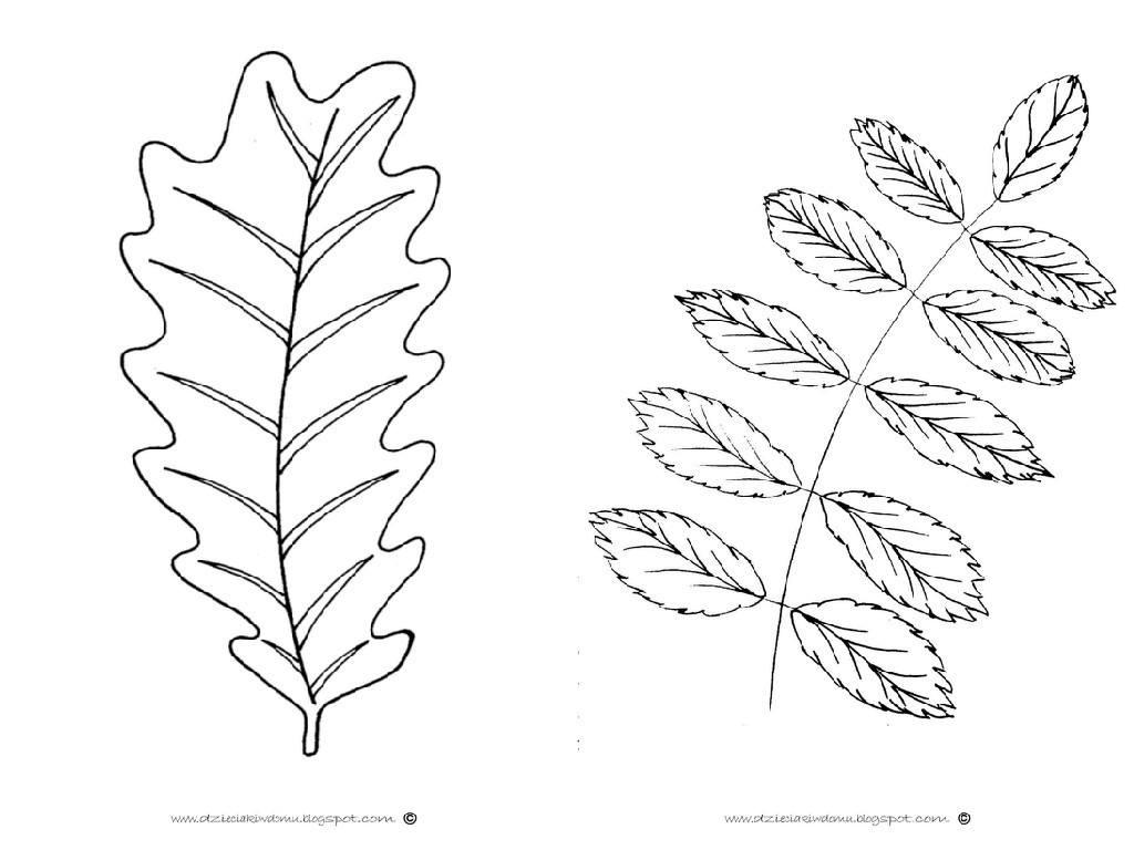 szablony liści