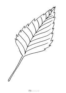 liść brzozy - szablon