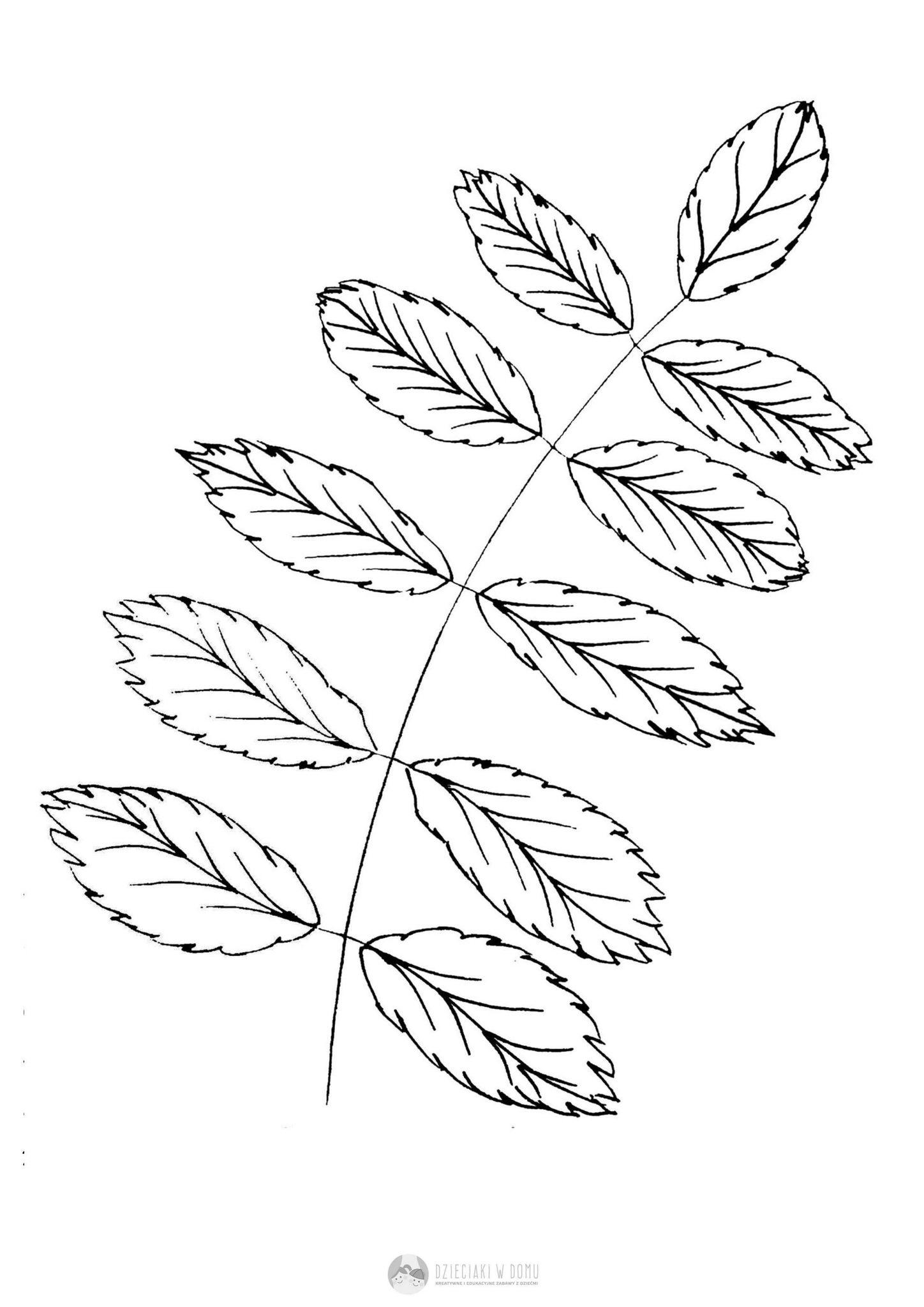 Liscie Drzew Szablony I Karty Pracy Dzieciaki W Domu