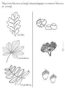 połącz liście drzew razem z owocami - karta pracy dla dzieci