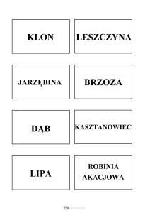 nazwy drzew - szablon