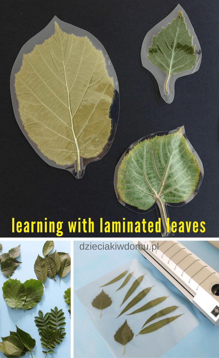 laminowane liście