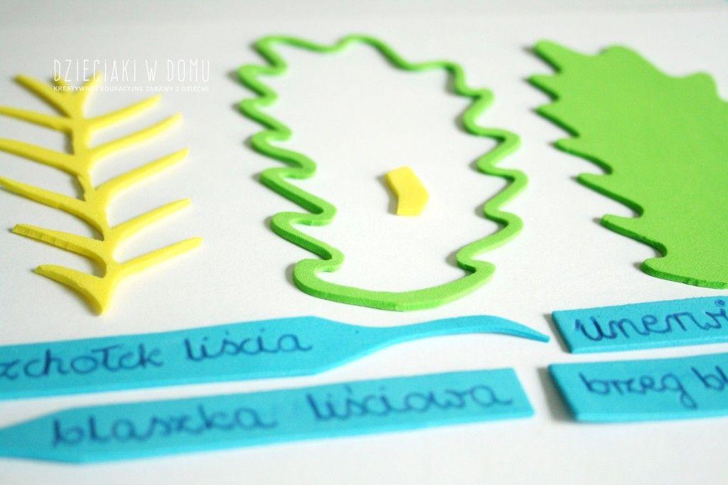budowa liścia - schemat z kreatywnej pianki dla dzieci